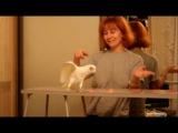 Попугай танцует ламбаду